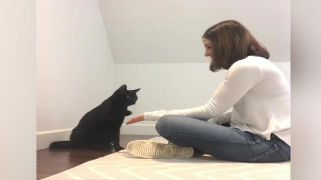 Cat and human show off their super-cool secret handshake