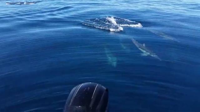 Fishermen Encounter Large Pod Of Beautiful Dolphins