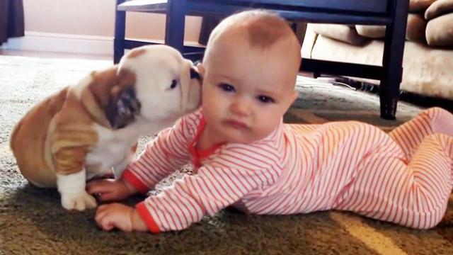 This kid feels a little disoriented at first by the shower of kisses by his bulldog, but in the end