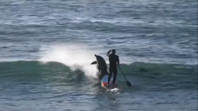 Paddleboarder gets swarmed by a wave of dolphins—but watch