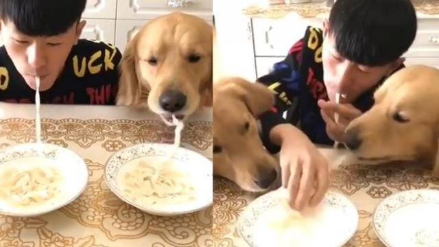 Who do you reckon would win in a noodle-eating race between a man and his dogs- The Poke