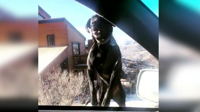 El video viral capta al perro ferozmente optimista que salta en la visita