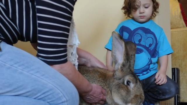 Meet Darius The World's Biggest Bunny That May Soon Be Outgrown By His Son