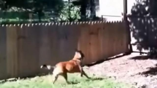 He Built A Dog Fence, But THIS Happens