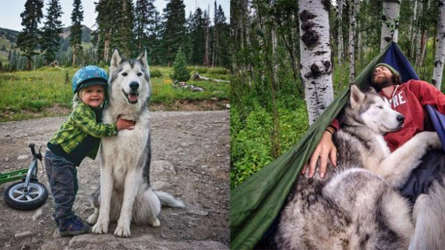 Loki The Wolfdog Goes On Epic Adventures With His Owner Who Hates To See Dogs Locked Away
