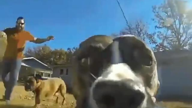 Clever Dog Steals Owners GoPro And It's The Funniest Thing Ever