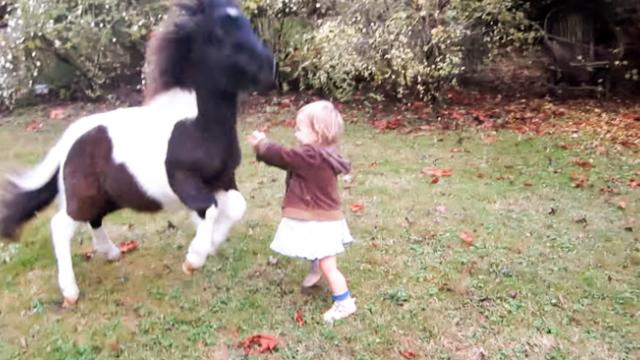 CUTEST VIDEO EVER! One Year Old Baby Running and Playing w Miniature Horse