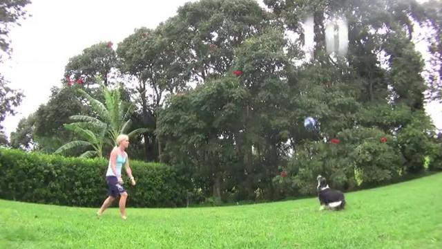 Unbelievably Talented Border Collie Plays Perfect Volleyball
