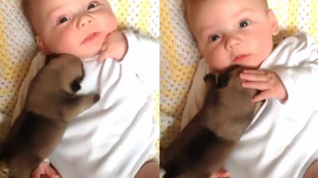 Funny Baby and Puppy Video Will Melt Your Heart_Large
