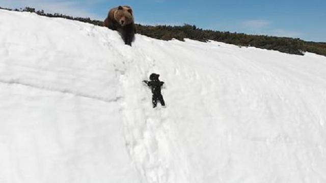 Determined-Baby-Bear-Climbs-Steep-Mountain-To-Reunite-With-M