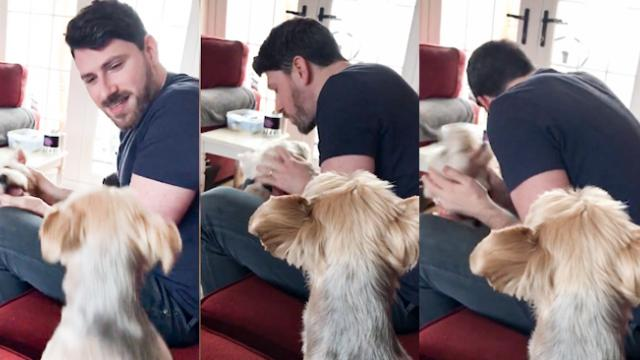 Green eyed puppy! Dog gets jealous of other pooch getting owners attention