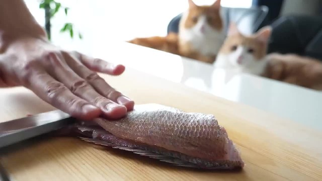 Watch this chef whip up some sushi for cats