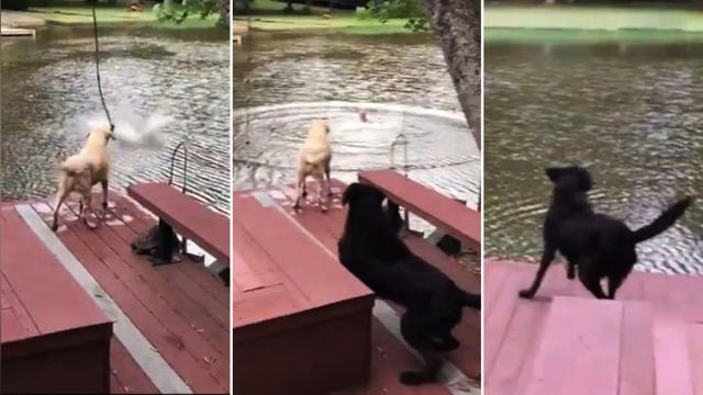 Dogs' owner swings on rope & falls in lake—when he starts