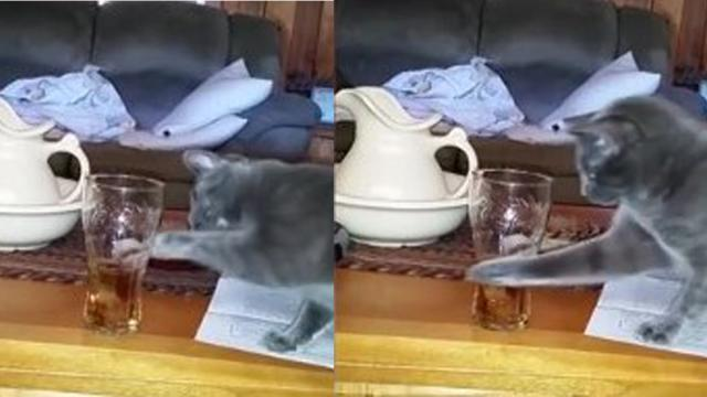 Not So Smart Cat Too Dumb To Steal Owners Ice From Glass_Large