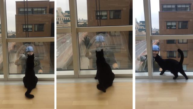 Window washer is cat's new best friend