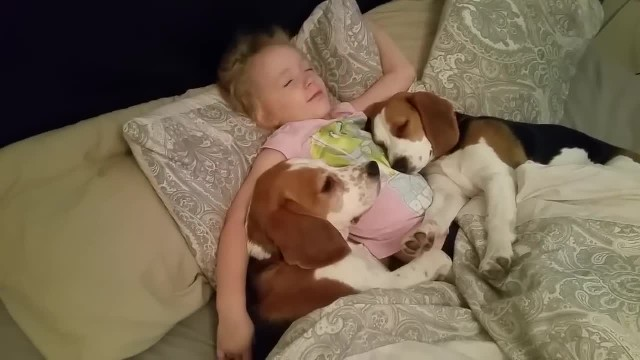 Cute Dogs and Little Girl Don't Want Get Out Of Bed - Charlie the dog, puppy Lilly and Baby Laura