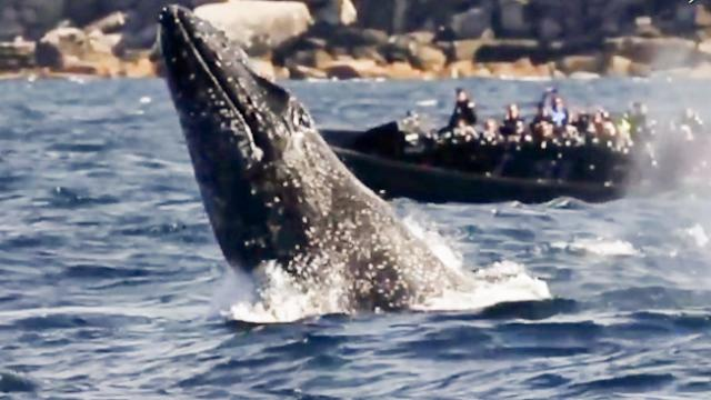 Breathtaking whale breach shocks tourists at Bondi beach