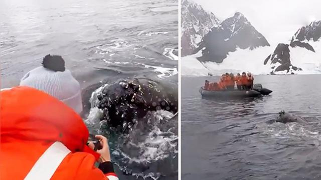 Group heads out to whale watch near Antarctica—they're