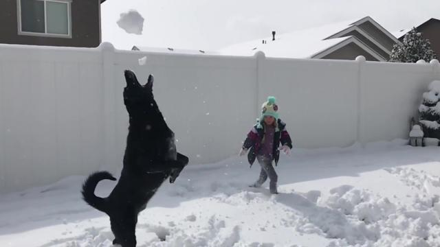 Snow Buddies - Dog Plays in the Snow With Little Girl [C9n-p7Ds9ZU]