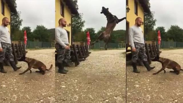 Slow-motion footage captures dog make spectacular leap to catch snack
