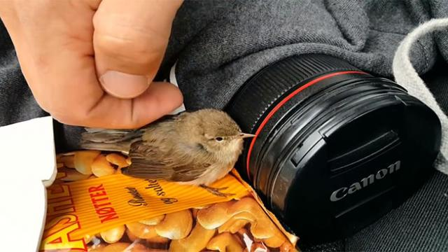 Guy Finds A Stuck Bird With No Way Out. His Genius Rescue Made Me Stand Up And Applaud