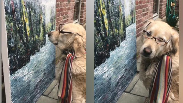 This dog loves to study her owner's artwork