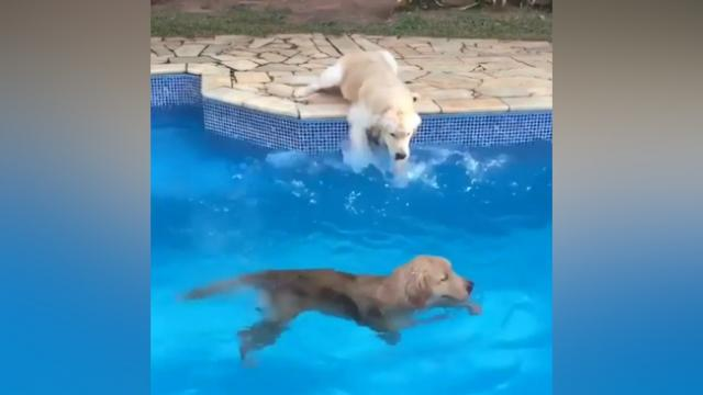 Good pup practices its dog paddle poolside