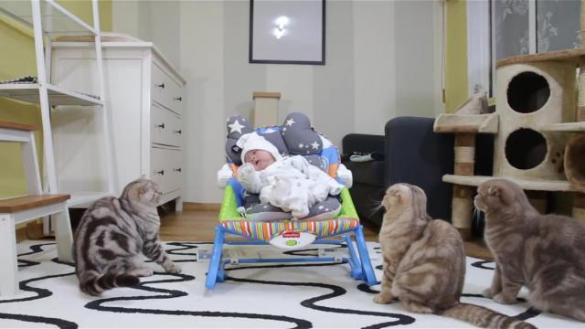Cat Meets His New Baby Brother For The First Time, And We Can't
