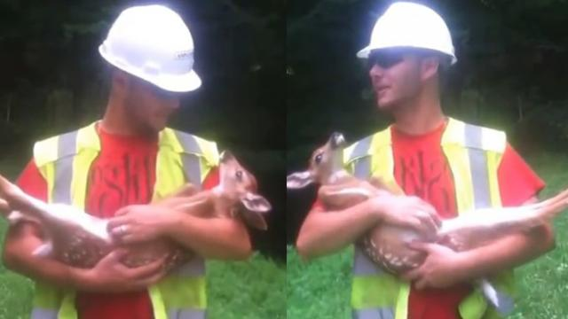 Baby Deer Enjoying Belly Rubs