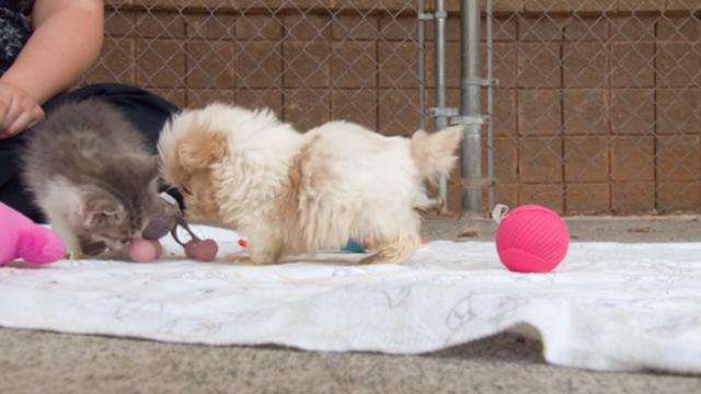 They Introduce This Rescue Pup To A New Friend – And It's Too Adorable For Words - %