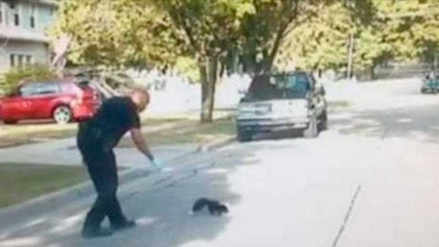 Officer Removes Yogurt Cup Off Frazzled Skunks Head Before Running Away In Opposite Direction