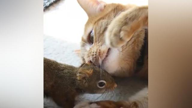 AFTER WHAT THIS CAT AND SQUIRREL HAVE BEEN THROUGH, THEY'LL BE BROTHERS FOR LIFE