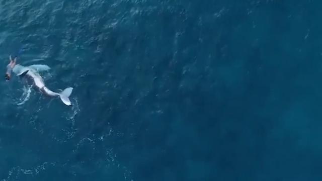 Flipping crazy! Incredible moment a snorkeler is taken for a ride by a baby whale