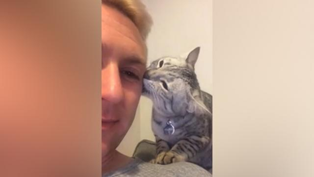 Affectionate Kitty Tries to Apologize in The Most Adorable Way
