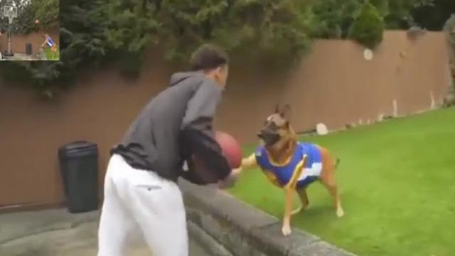 Dog throw a perfect basketball lob for an alley-oop