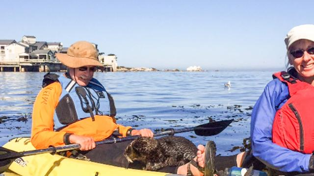 Close Encounter of the Otter Kind, Otter in Kayak