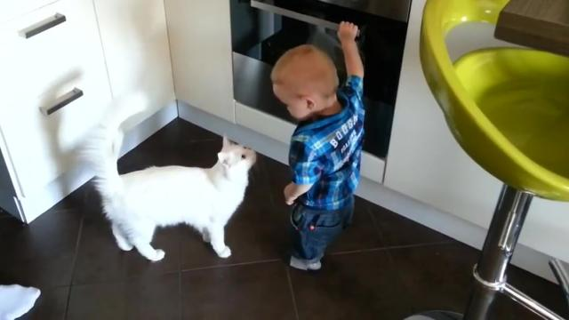Cat Protects Little Boy From Hot Oven