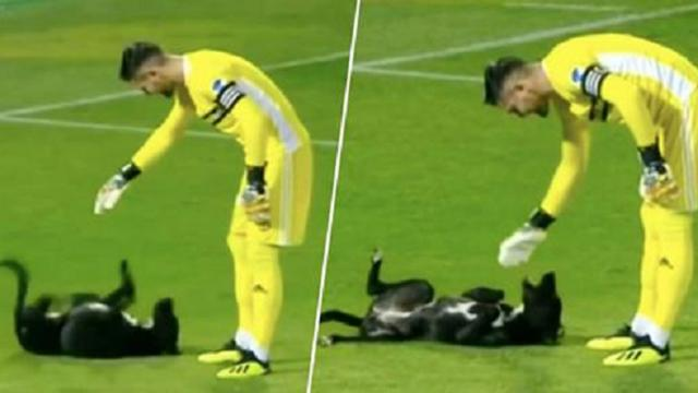17Dog pitch invasion becomes highlight of Georgia soccer