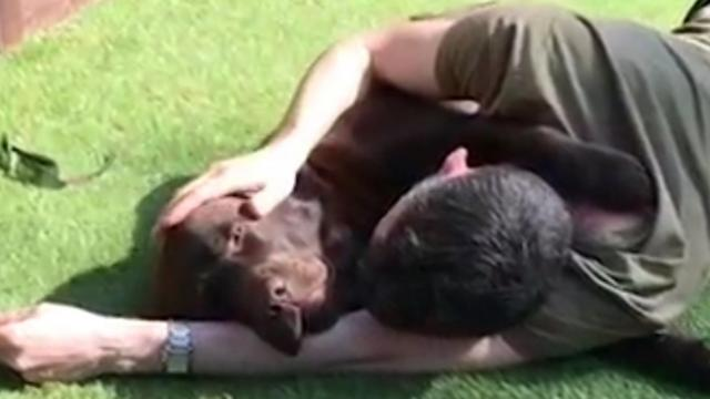 Adorable Chocolate Lab Enjoys Cuddles in the Sunshine