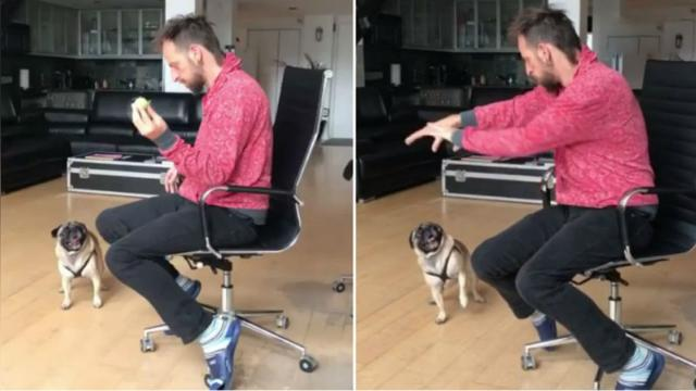 This pug is super confused when man performs magic