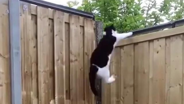 Outdoor Cat Proof Fence Really Works!