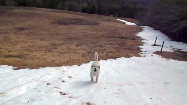 Owners find their dog playing on a hill, the game he invented is genius