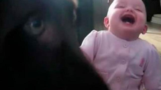 Watch Baby Girl Laugh Hysterically Over a Dog Being Fed Popcorn