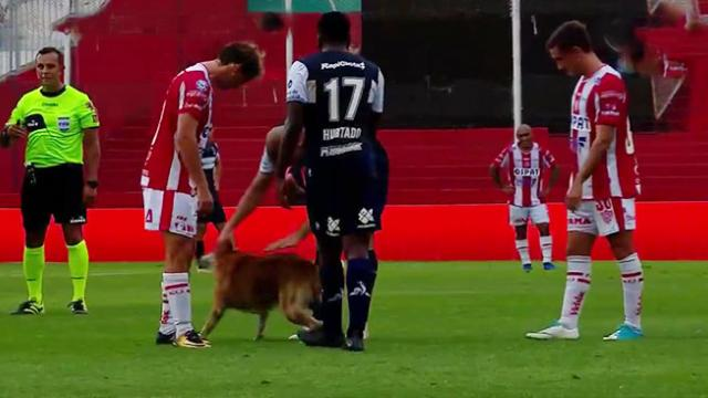 Dog Shamelessly Interrupts Soccer Match To Demand Pets From The Players