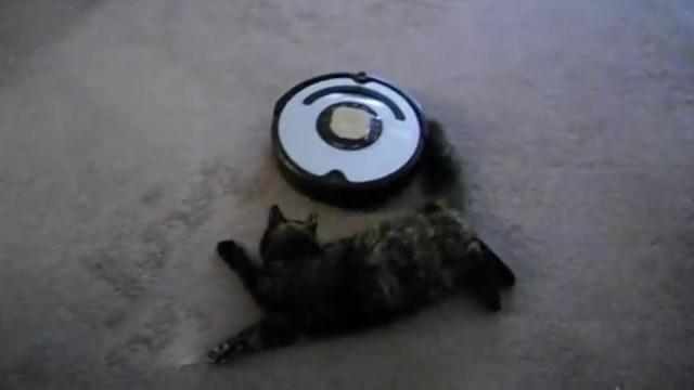 Cat on Roomba Funny Adventures and More_Medium