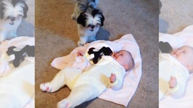 Baby meets puppy—now keep your eye on what the naughty