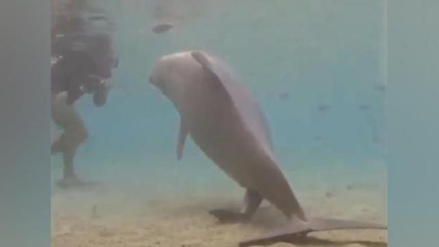 Breathtakingly Beautiful Video Shows Dolphin Giving Birth