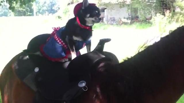 Canine Cowgirl Rides A Horse Like Its Totally Normal