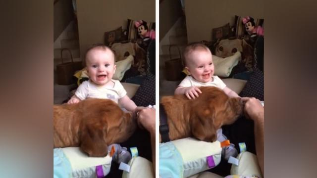 Dog makes baby laugh hysterically