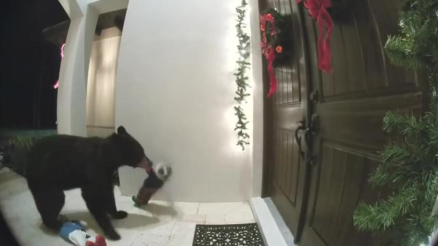 VIDEO_ Bear rings doorbell at home in Florida_Large